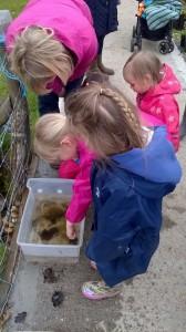 schools and gardening